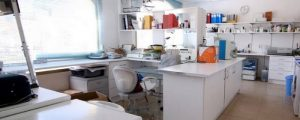 Prácticas de Asistente Técnico Veterinaria (Torrelaguna – Madrid)