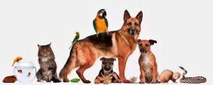 Amor por los Animales Blog Medefor