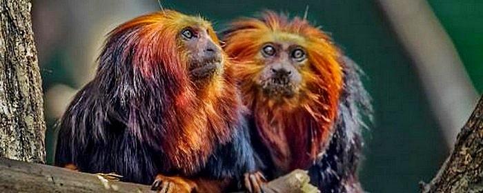 Animales Exóticos de Moda en España