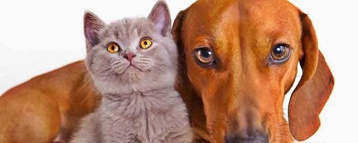 Beneficios de la Castración en Animales