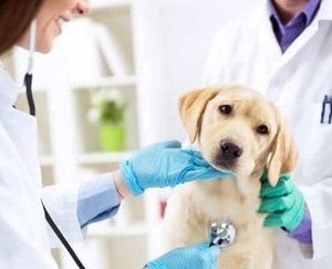 Curso Asistente Técnico Veterinario (ATV)