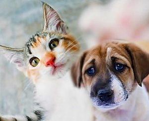 Curso Psicología Canina y Felina
