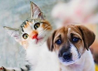Curso Psicología Canina y Felina Medefor