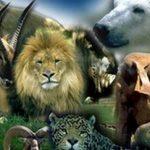 Curso Técnico Auxiliar de Veterinaria Especialista en Animales de Zoológico Medefor