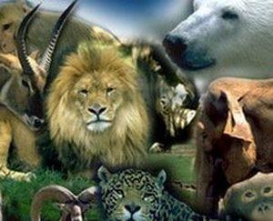 Curso Técnico Auxiliar de Veterinaria Especialista en Animales de Zoológico