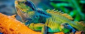 Curso de Especialista en Animales Exóticos Blog Medefor