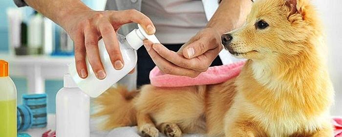 Higiene del Perro y Cuidados Básicos
